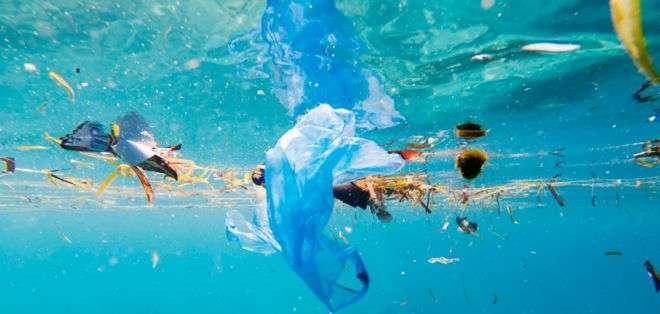 """""""Seguramente es perjudicial que las crías de peces ingieran partículas de plástico en la etapa crítica de los primeros días""""."""