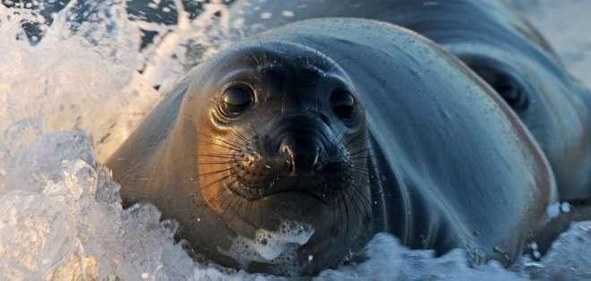 Imagen referencial que muestra a su foca. Foto: pixabay.com