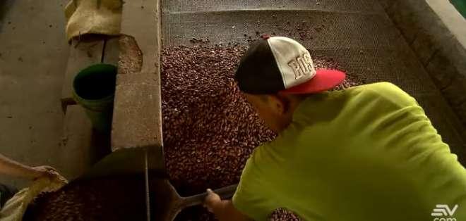 En Ecuador, 350.000 familias dependen de la producción cacaotera. Foto: Captura