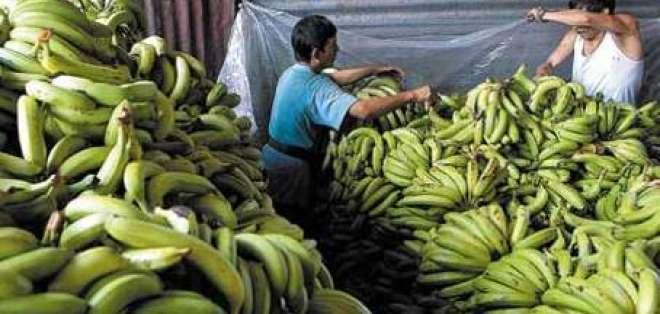 Productores bananeros en crisis por incumplimiento de precio oficial