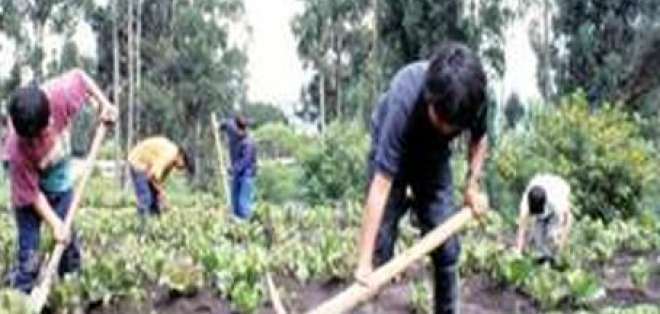 Heladas afectan cultivos en la provincia de Cotopaxi