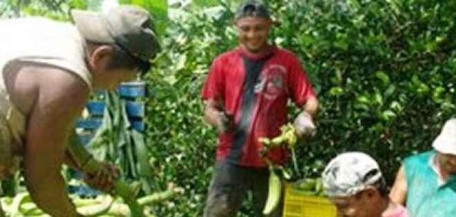 Pequeños productores de banano inconformes ante estado de emergencia