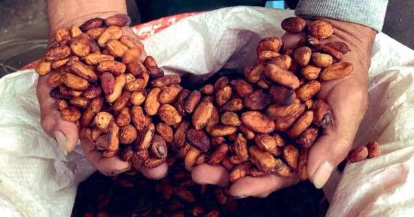 Moreno lanza Acuerdo Nacional por el Cacao