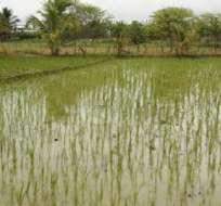 Sectores agrícolas de El Oro son declaradas en Estado de Emergencia Vial a causa de las lluvias.
