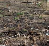 Nuevo mapa de alta resolución muestra pérdida mundial de bosques y junglas.