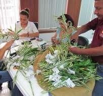 Miles de feligreses recibirán plantas de bambú este 'Domingo de Ramos'.