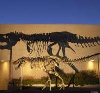 """Este fósil es uno de los más completos del """"Tyrannosaurus rex""""."""