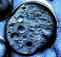 SALUD.- En el documento se demostraba un método sencillo y revolucionario para reprogramar células adultas. Foto: Internet