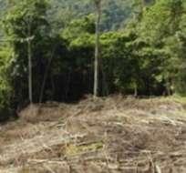 Indonesia adelantó a Brasil con casi el doble de destrucción datada en 2012 de bosques en los que viven algunos de los animales más amenazados del planeta.