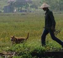 El mercado nacional se abastece de canes criados en granjas y de otros importados de contrabando. Foto: AFP.