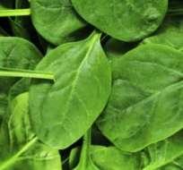 La espinaca pertenece a una familia de vegetales muy poderosa.