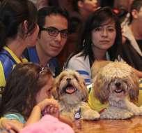 Ley Orgánica de Bienestar Animal sancionará la exhibición de animales en tiendas. Foto : API