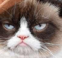 Ahora, Grumpy Cat protagonizará una película en la que la diversión, la ironía y la antipatía de este animal están garantizadas.