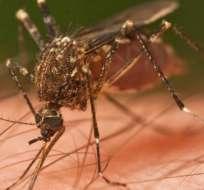 Cerca de 700.000 personas al año mueren actualmente por variaciones de E. coli, tuberculosis y malaria.