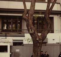 El artefacto fue detectado por perros de la Guardia Republicana, que realiza controles diarios en las zonas de embajada. Foto: referencial