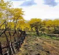 El Bosque Seco se ubica entre las provincias de Loja y El Oro y abarca más de 500.000 hectáreas.