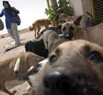 IRÁN.- El objetivo de esta iniciativa, que forma parte de una campaña, es mantener controlados a los canes. Fotos: AFP
