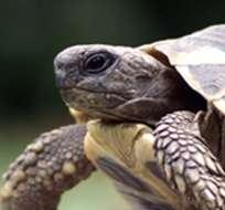 Algunos de los animales liberados hoy fueron víctima del tráfico de especies silvestres.