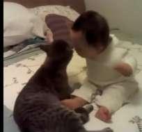 LA ARAUCANÍA, Chile.- Rául, el gato de la pequeña, fue rescatado de la calle y atendido por la familia. Foto: Captura de Video.