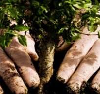 ECUADOR.- El país reforestó 765.073 plantas en un perímetro de 2.269 hectáreas, en mayo anterior. Foto: Archivo