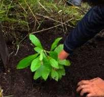 ECUADOR.- Entre 2008 y 2012 se perdieron por año 65.880 hectáreas y fueron recuperadas 29.000. Foto: Archivo