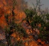 LIMA, Perú.- El incendio afecta unas 90 hectáreas en el sector de Colchani y ya se ha controlado en un 50%. Foto: Twitter Agencia Andina.
