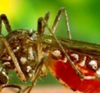 QUITO.- La OMS recomendó eliminar los reservorios de agua donde se pueden reproducir ese tipo de mosquitos. Foto: Notiamerica.