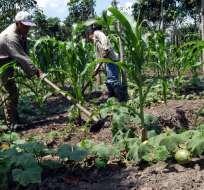 ECUADOR.- Según Cordes, el fenómeno de El Niño amenaza la reactivación de empleo en zona rural. Foto referencial de Internet