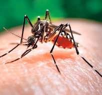 ECUADOR.- Según la entidad, los pacientes se contagiaron del virus luego de un viaje a Colombia. Foto: Internet