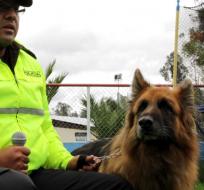 Entre los perros hay labradores, pastores alemanes, golden retriever, mestizos. Fuente: Ministerio del Interior