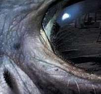 Según el experto, todos los fenómenos son explicables y provocados por la vista humana.