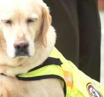 QUITO, Ecuador.- Desde abril pasado, la Policía Nacional buscó hogar para los perros dados de baja. Foto: Ministerio del Interior