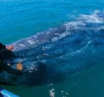 Probablemente la gente de las especies marinas grandes para el consumo humano ponga en peligro la supervivencia de estas especies. Foto: Internet.