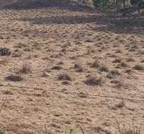 La falta de lluvias ha afectado especialmente a las zonas dedicadas a la agricultura en el archipiélago. Foto: Fundargalapagos.org