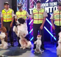 Perros de rescate ganan la final de Ecuador Tiene Talento 5