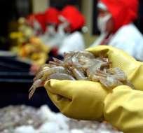 ECUADOR.- El camarón es uno de los productos de exportación que ingresará al mercado europeo con cero arancel. Foto: Archivo