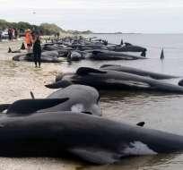 El hecho ocurrió en Farewell Spit en la región de Golden Bay. Foto: AP