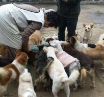 La Sra. Jung se ganó el título de heroína por brindar alojamiento a los canes. Foto: Captura