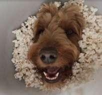 El video del can es un fenómeno viral en las redes sociales. Foto: Captura