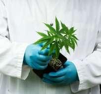 La norma busca garantizar el acceso gratuito al aceite de cáñamo y demás derivados de la planta.