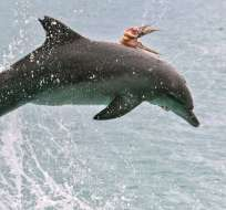 Imagen fue captada por fotógrafa Jodie Lowe en el mar de Australia. Foto: Twitter