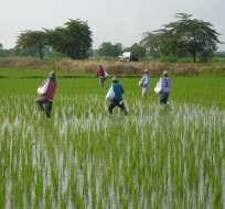 Viceministro de Agricultura informó que se han entregado en 2017 más de 12 mil seguros. Foto: Referencial /Proagrick.