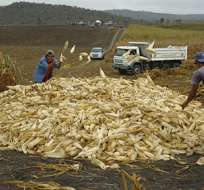El Ministro de Agricultura señala que se prepara un plan para atender a los maiceros afectados. Foto: MAGAP.