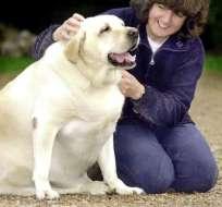 En el Reino Unido y Estados Unidos, más de la mitad de los perros y otras mascotas son obesos.