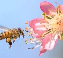 El valor de las abejas para la seguridad nutritiva es algo que se ha reconocido recientemente.