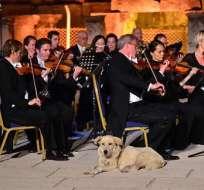 ESTAMBUL, Viena.- La aparición del animal provocó aplausos en el show de la Orquesta de Cámara de Viena. Foto: AFP.
