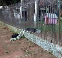 La mascota arrastró su frazada para ayudar a un perrito que pasaba frío. Foto: Redes sociales