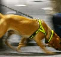 Los perros tienen 300 millones de células olfativas receptoras, mientras que los humanos poseen sólo 5 millones.