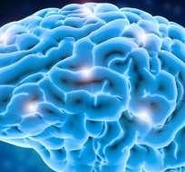 La parte del cerebro relacionada con el lenguaje está en la parte superior.