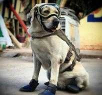 Gracias a su labor, Frida se ha convertido en un ícono canino que traspasa fronteras. Foto: Instagram